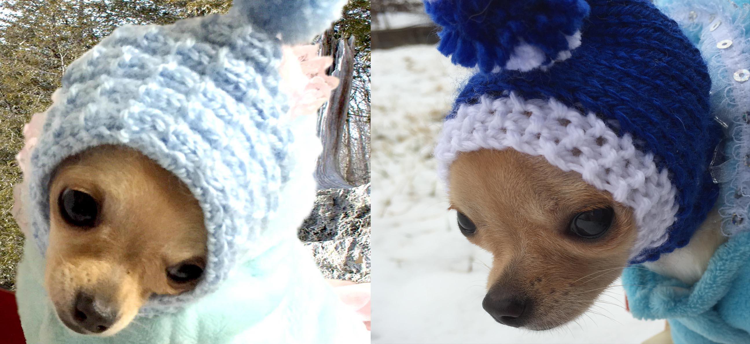 84658055171 xxxs vs xxs chihuahua hat size comparison