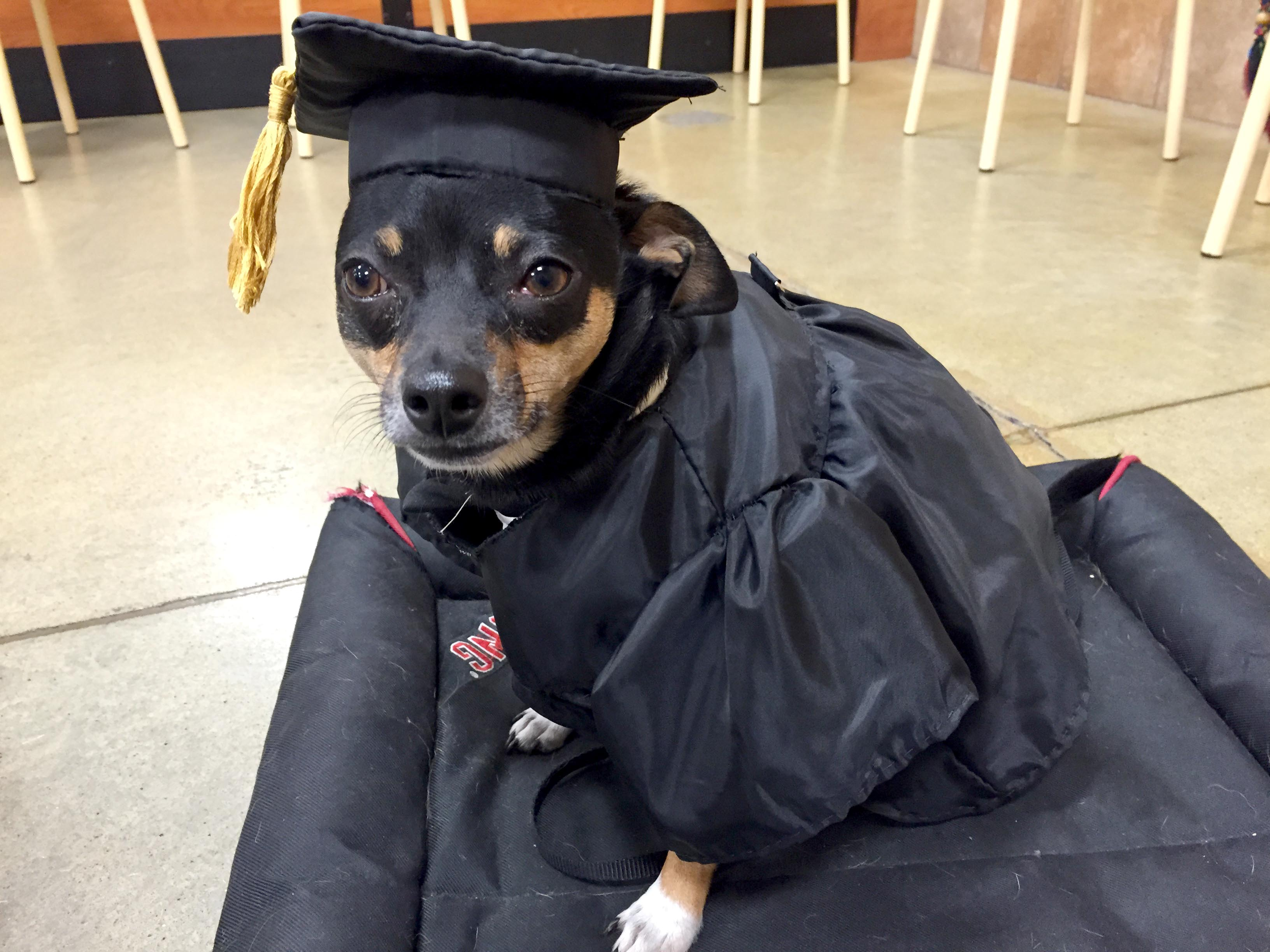 Dog Graduation Cap And Gown - Famous Dog 2018